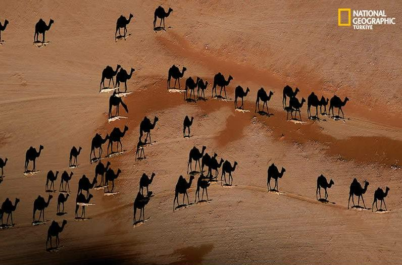camel shadows illusion