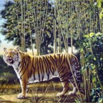 optical illusion hidden tiger